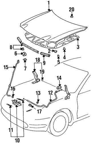 BODY/HOOD & COMPONENTS for 1999 Toyota Celica #1