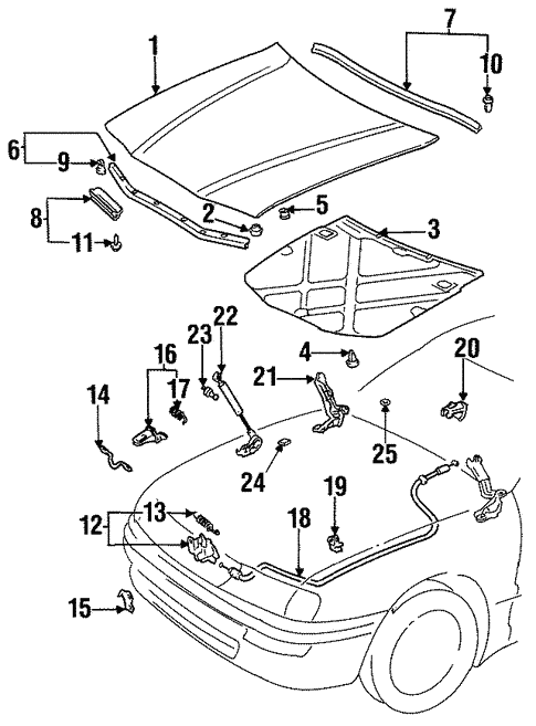 Hood Components For 1997 Toyota Avalon